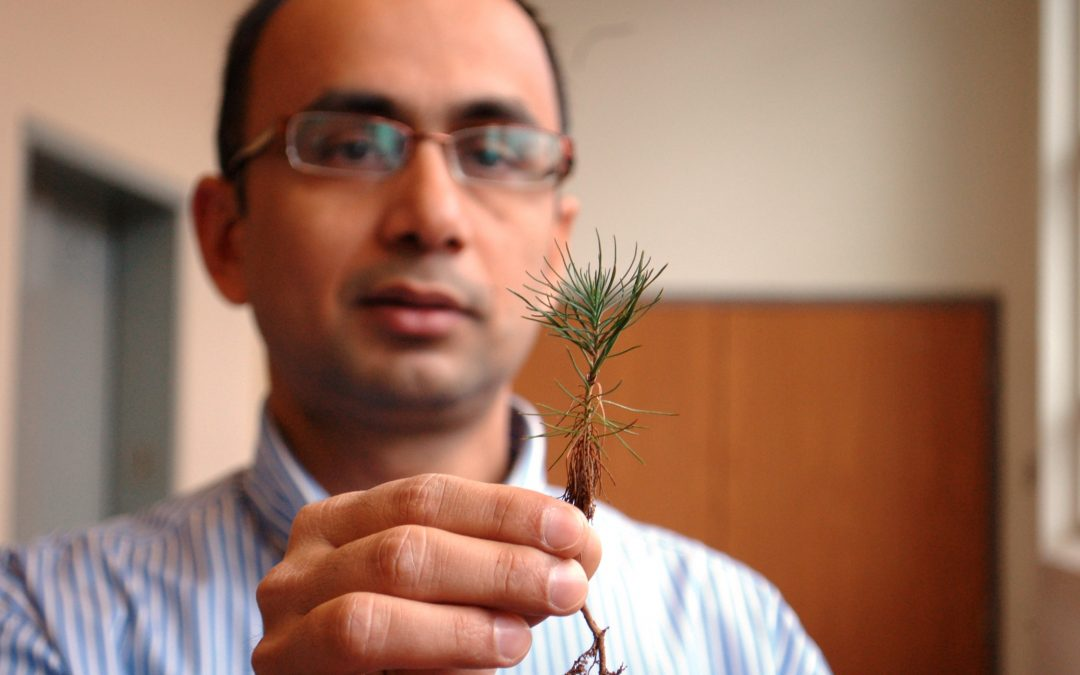 Auburn researcher turning pine trees into gasoline