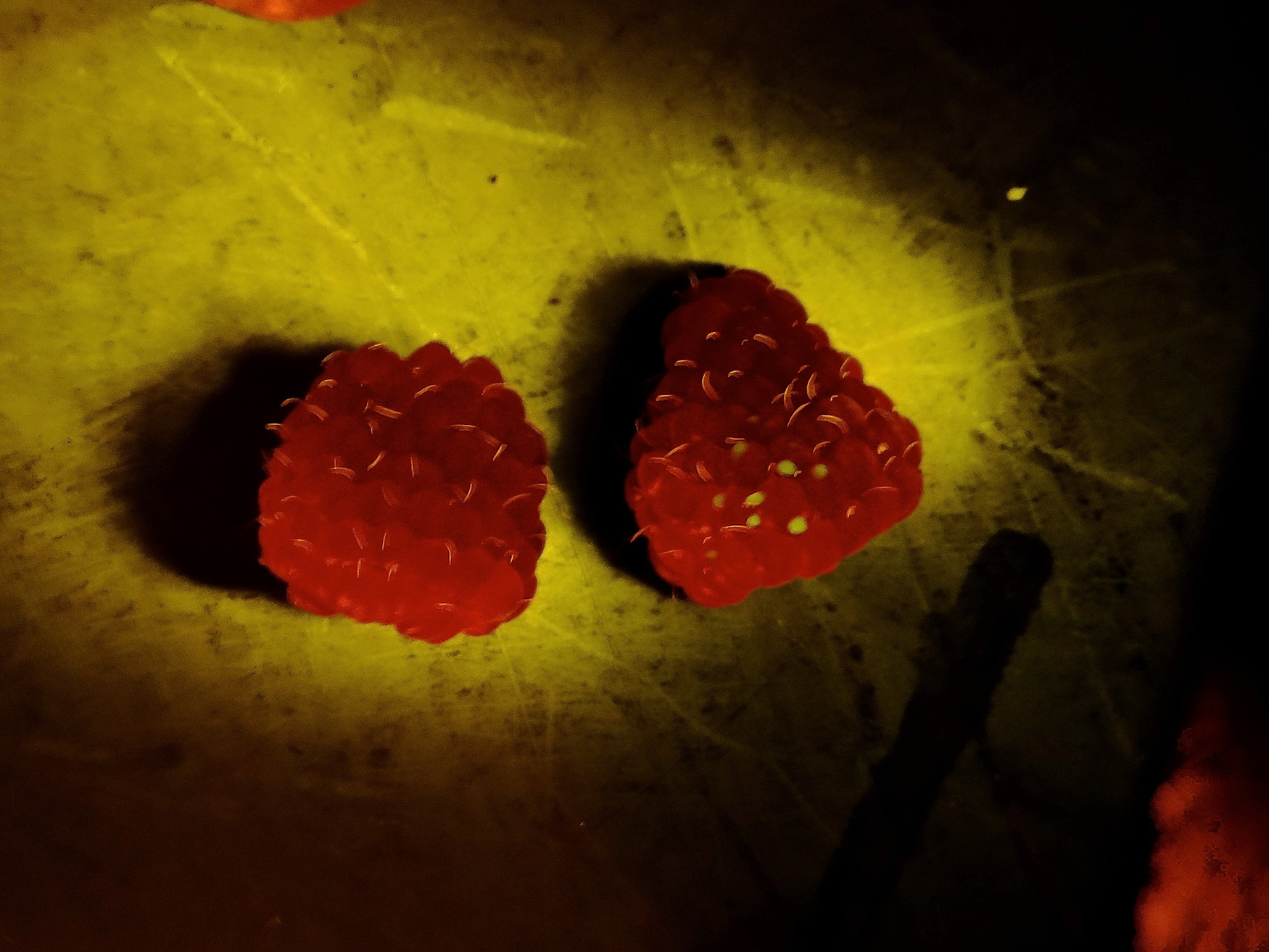 Photo of two rasberries