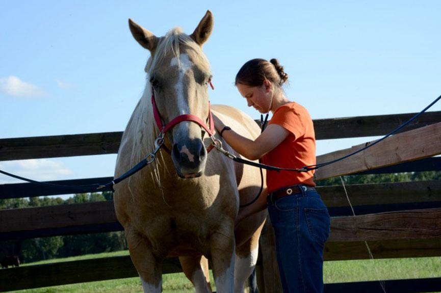 Horses a $2.08 billion industry in Alabama