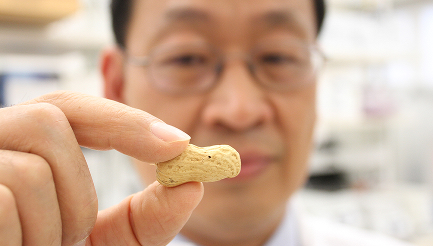 New peanut variety is first of its kind for Auburn