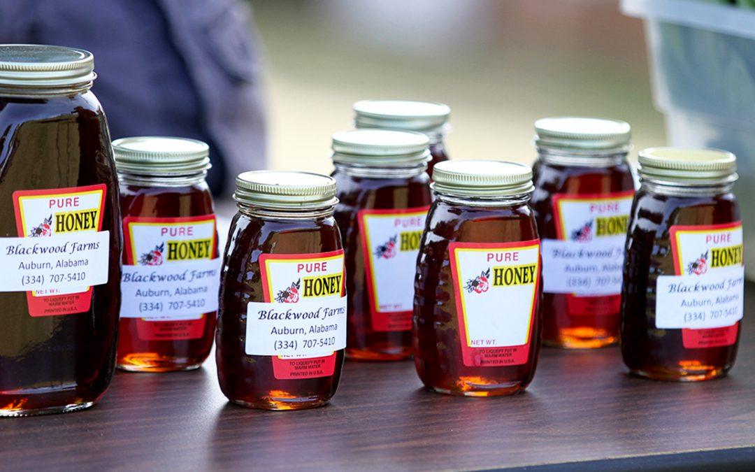 Bee Auburn activities to celebrate Pollinator Week