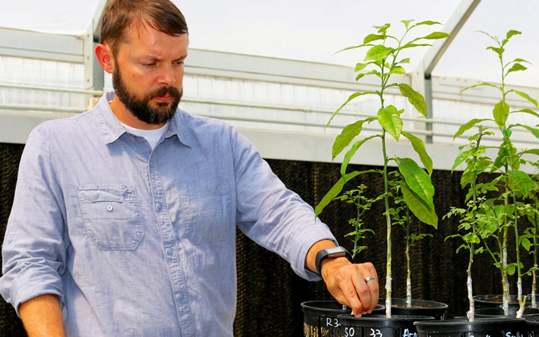 Auburn research professor Jay Speirs, feeding and testing plants soil in a greenhouse