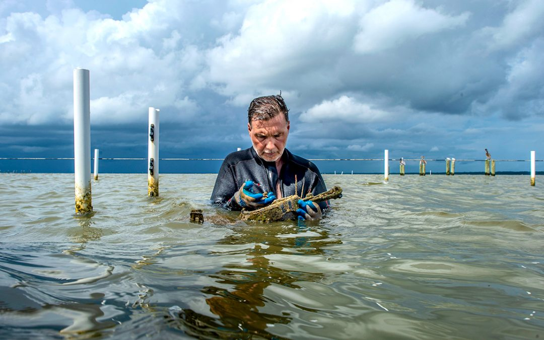 Auburn farmed-oyster study aims for safety on the half shell