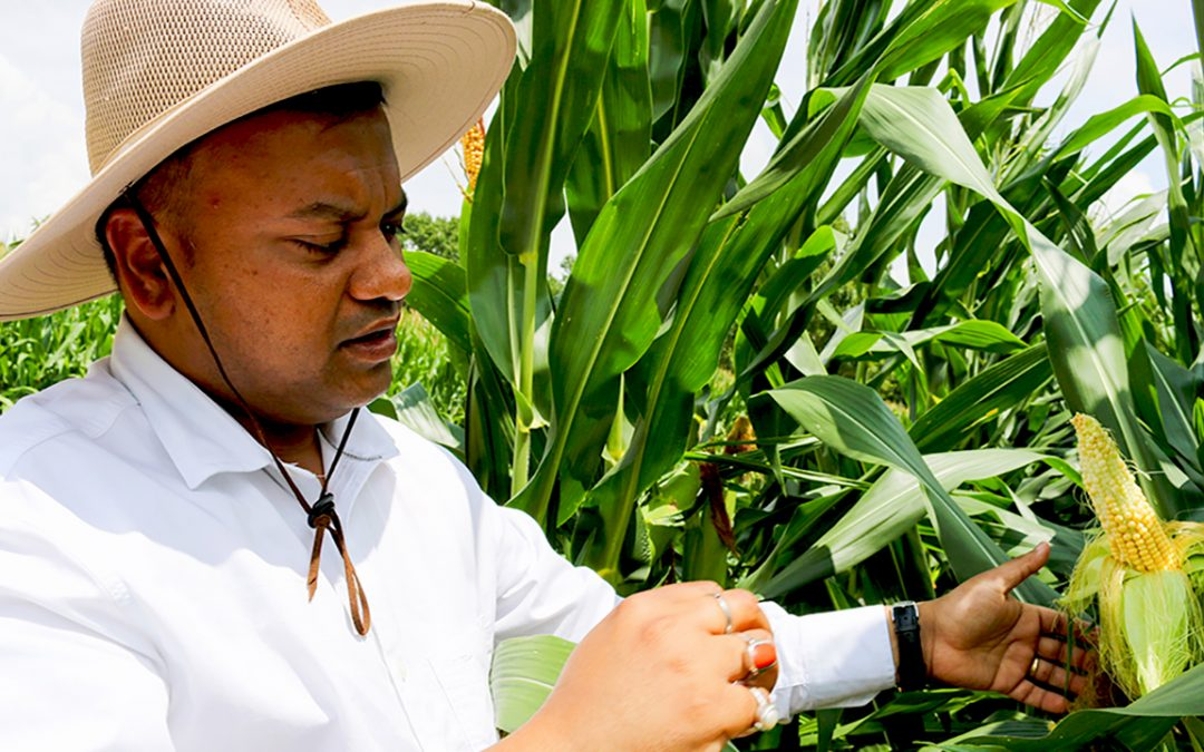 Different farming strategies needed for changing climate