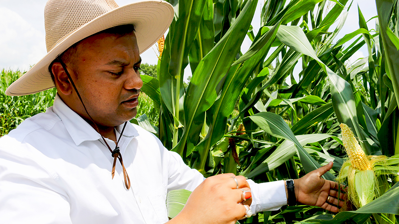 Rishi Prasad, Auburn Crop, Soil & Environmental Sciences, in a large hat corn crop farm field