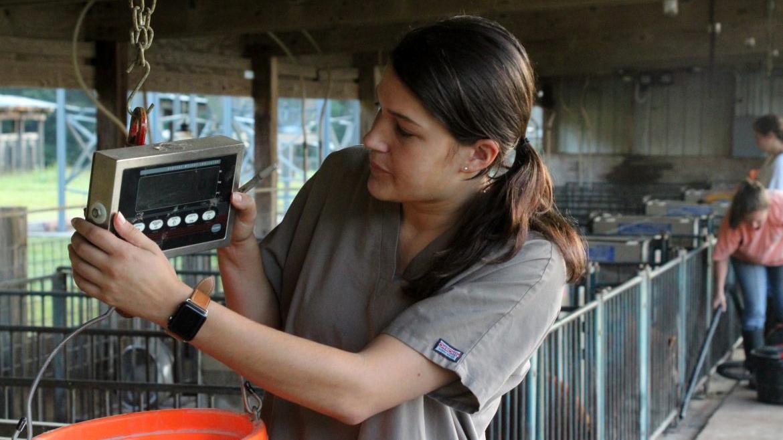 Maegan Reeves doing wolly pigs pre-vet med research, Auburn, Alabama