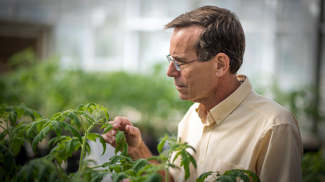 Joe Kloepper looking at plants in Auburn University greenhouse