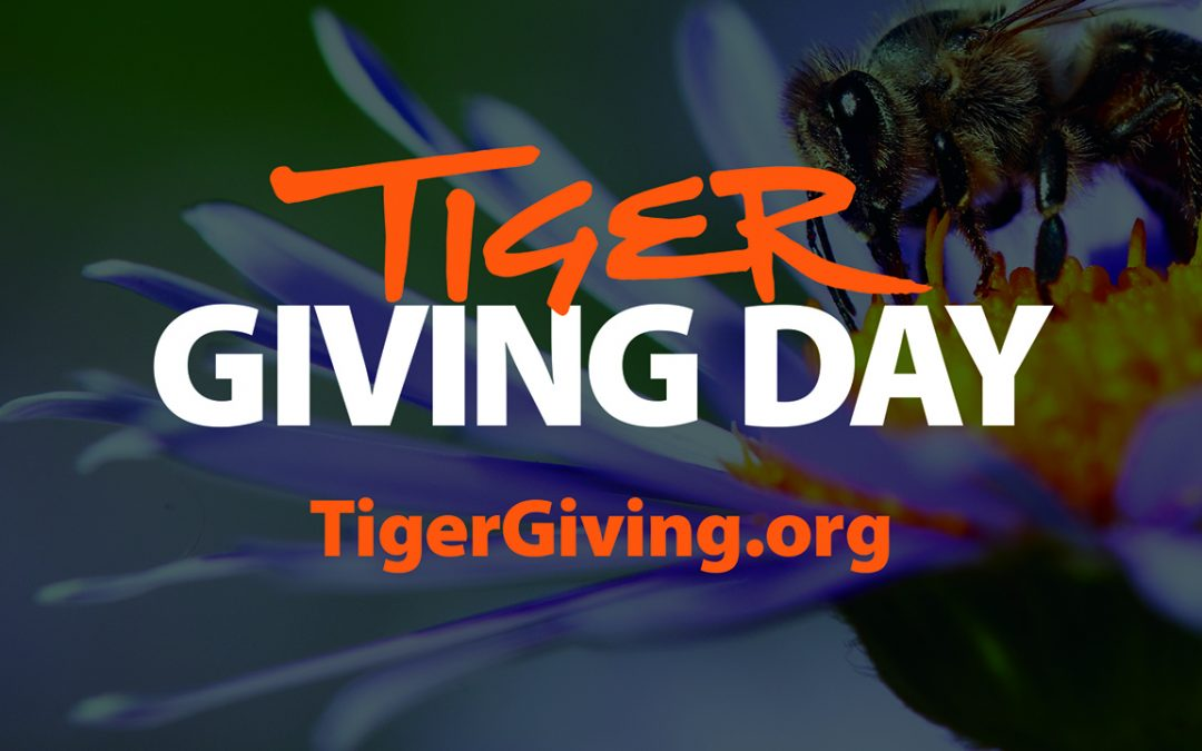 A sweet gift: Tiger Giving Day to support AU Bee Lab