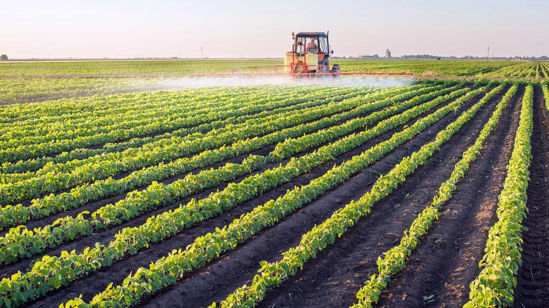 Tractor spraying a farm field row crops.