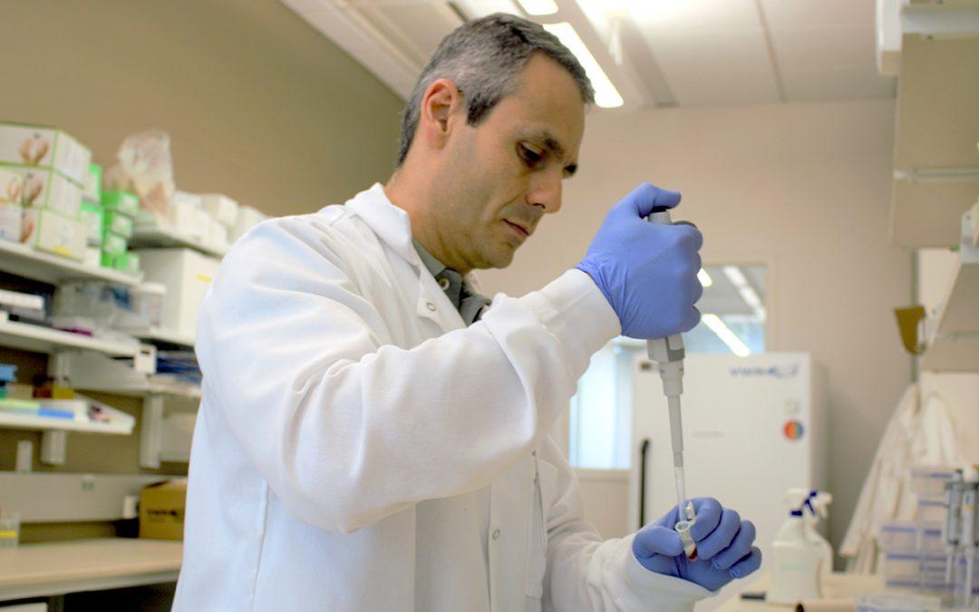 Auburn researcher working to improve cattle fertility
