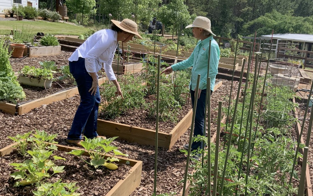 Gardening as cancer intervention: APT highlights innovative Harvest for Health program Aug. 5