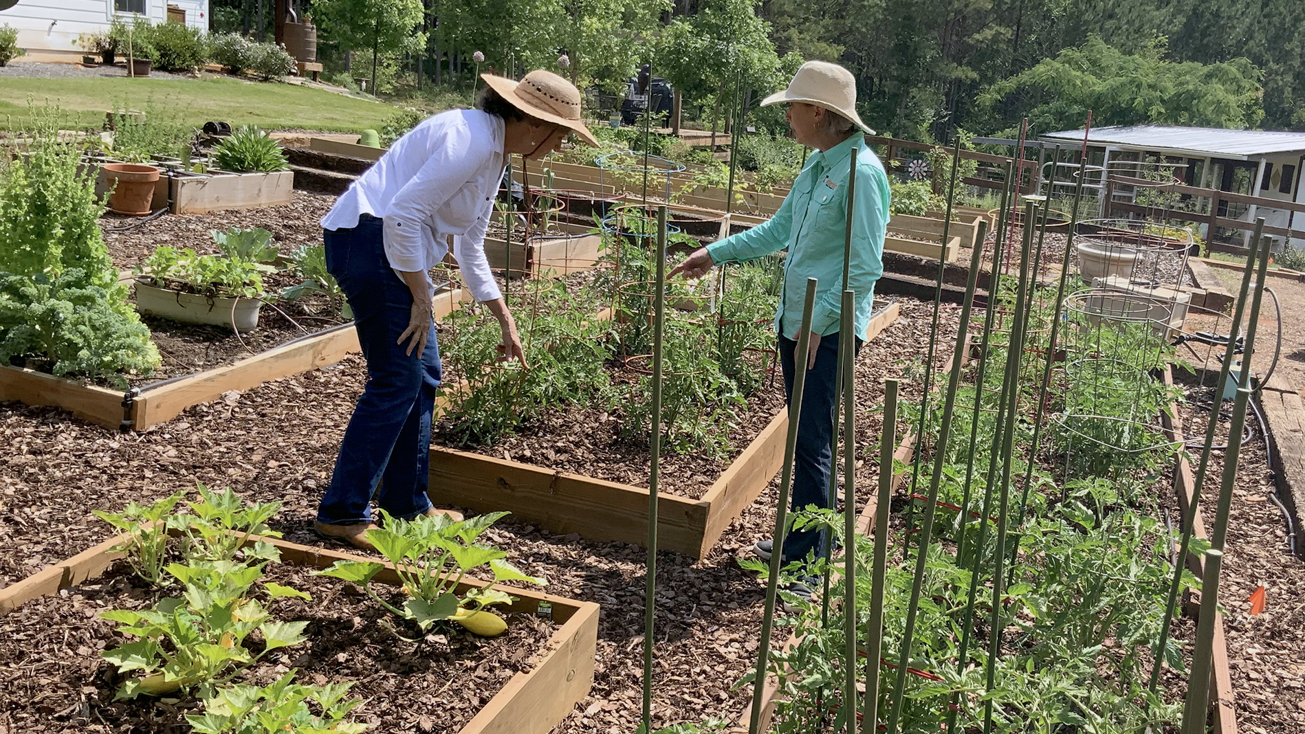 Harvest for Health, Cancer Program with Auburn's Department of Horticulture gardening