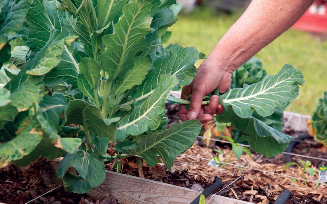 The tools for fighting cancer: how gardening has become a wellness practice