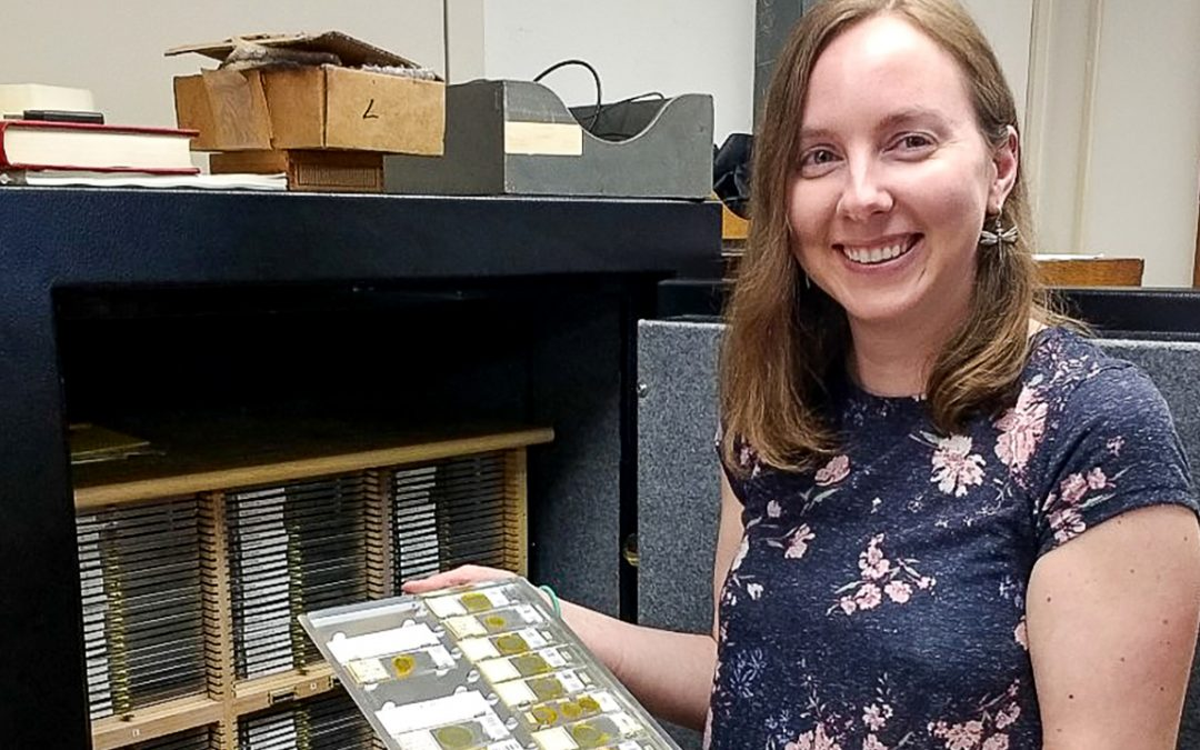 Ph.D. graduate's classification study is first of aphid-like insect in more than 100 years