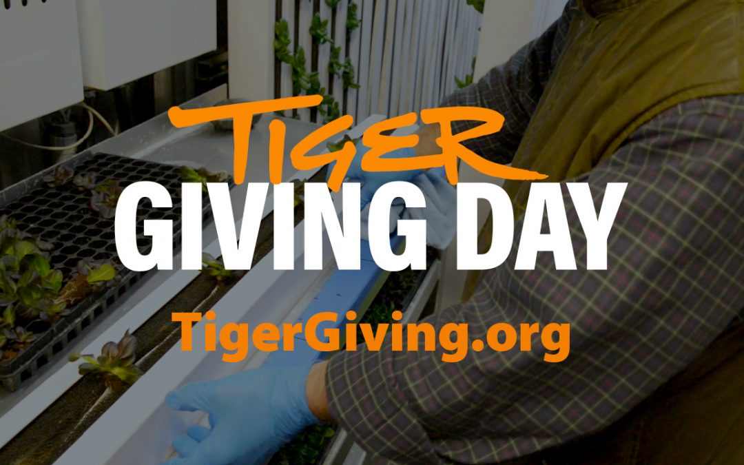 Tiger Giving Day to support Department of Horticulture's new hydroponic container gardens