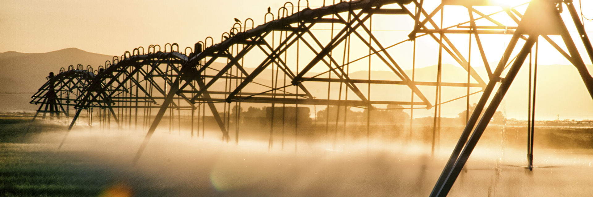 Sunset, contrasty view of a commercial irrigation system.
