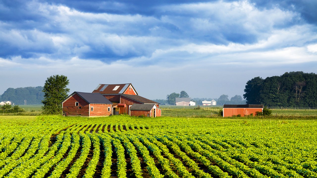 American country farm field with rows of fresh organic grown green crops, a red barn, and blue sky with clouds.
