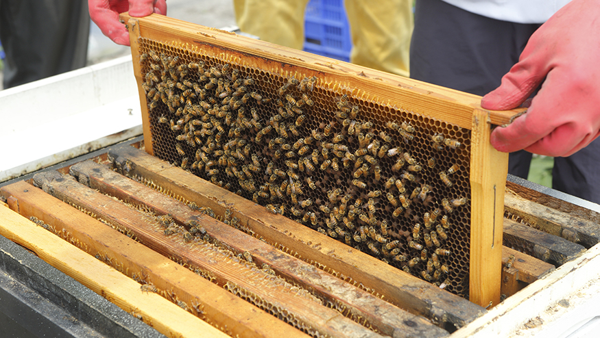Rack of Honey Bees