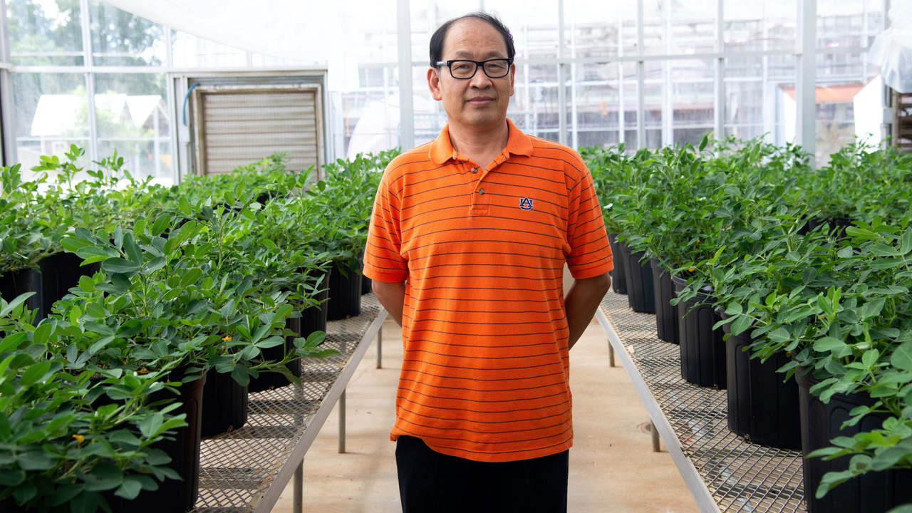 Photo of Charles Chen in greenhouse, plant & peanut breeding research