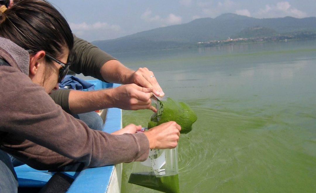 Auburn aquatic ecologist partners in $2 million war on blue-green algae