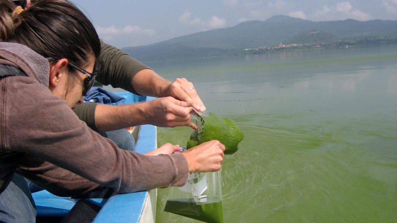 Auburn scientists sampling blue-green algae, cyanobacteria, in water off the side of a research boat