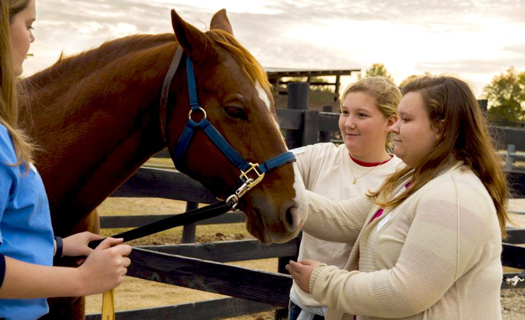 Ag, Veterinary Medicine team up to offer Horse U and Horse Course Dec. 1