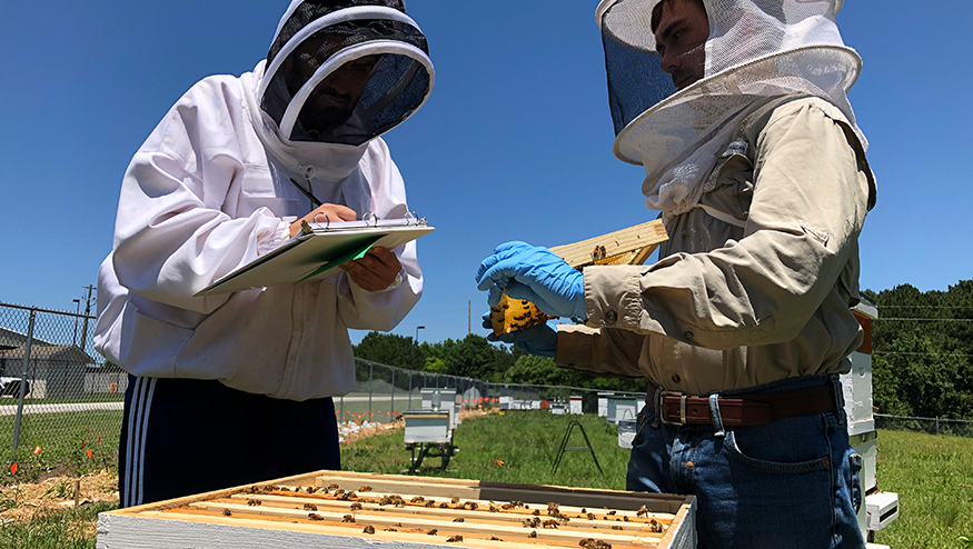 Bee keepers collecting data