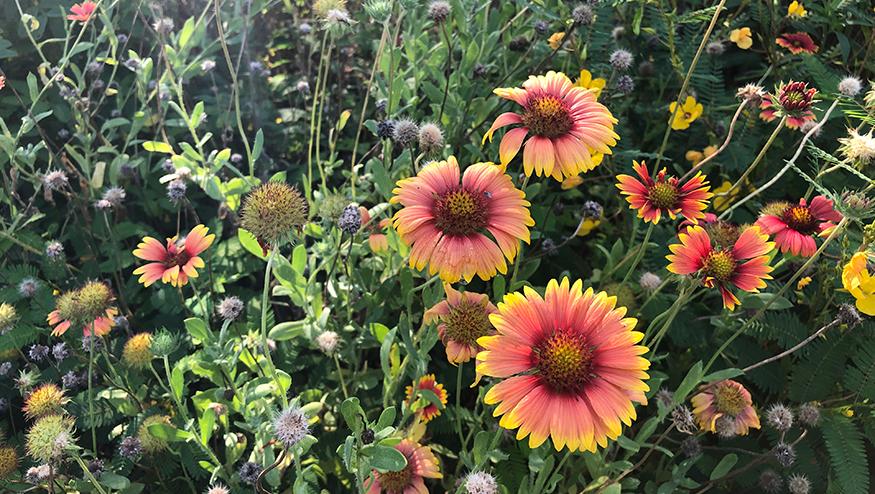 Bees Pollinator Habitat, Auburn Bee Lab, Alabama, Southern Flowers