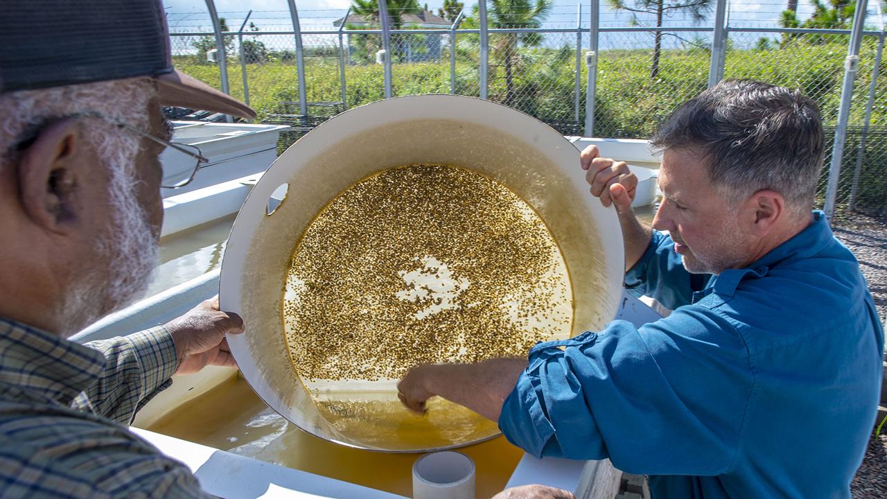Auburn-Shellfish-Lab-Research-Bill-Walton-Fisheries