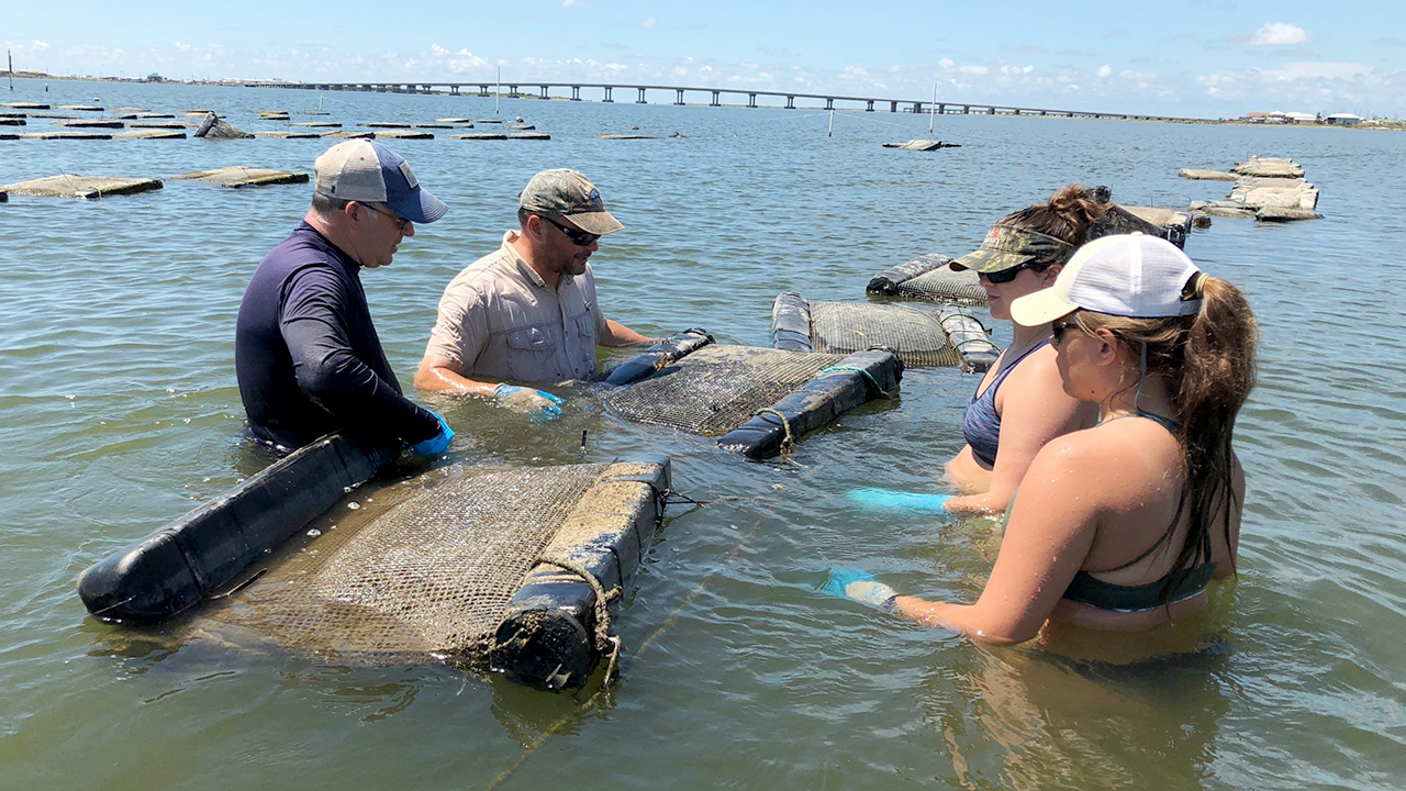 Auburn-Shellfish-Lab-Research-Students-in-Gulf-Oyster-Cages-3989-scaled