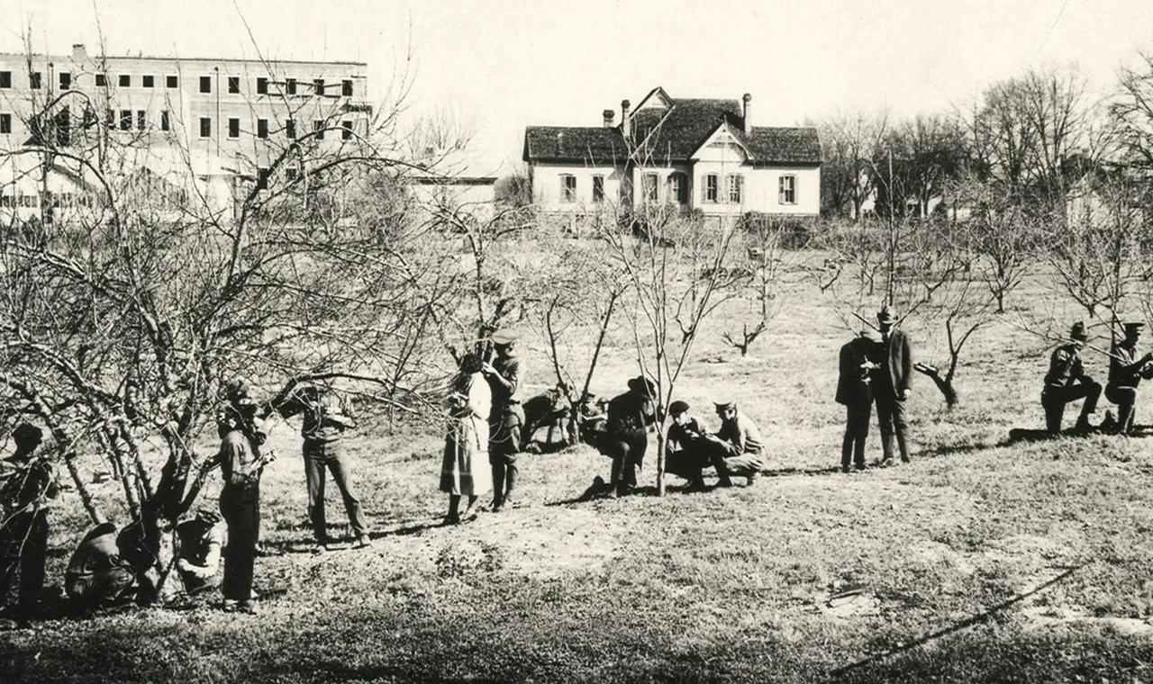 1910-Peach-orchard-Auburn-AL-USA