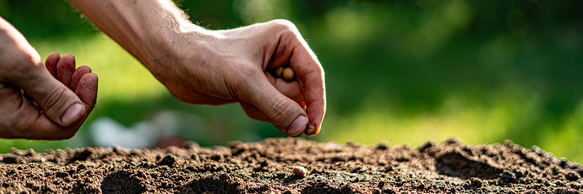 Hand-Planting-Seed-in-Dirt-Auburn-Soil-Water-Land-Use-Major-Degree-Option
