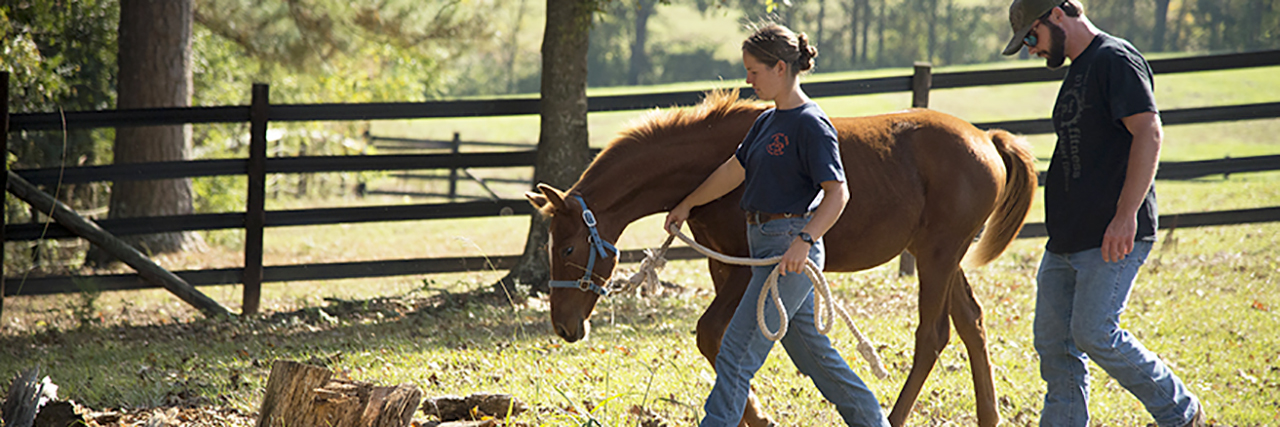 Horse-being-walked-by-2-Auburn-Students-Animal-Equine-Science-Major-Degree-sm