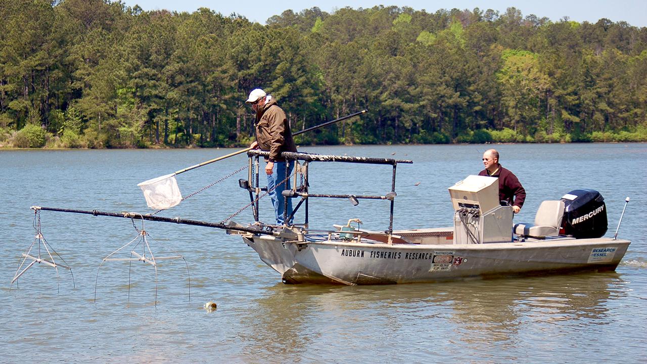North-Auburn-Fisheries-Research-Motor-Boat-on-Lake-Water-Nets-Bass