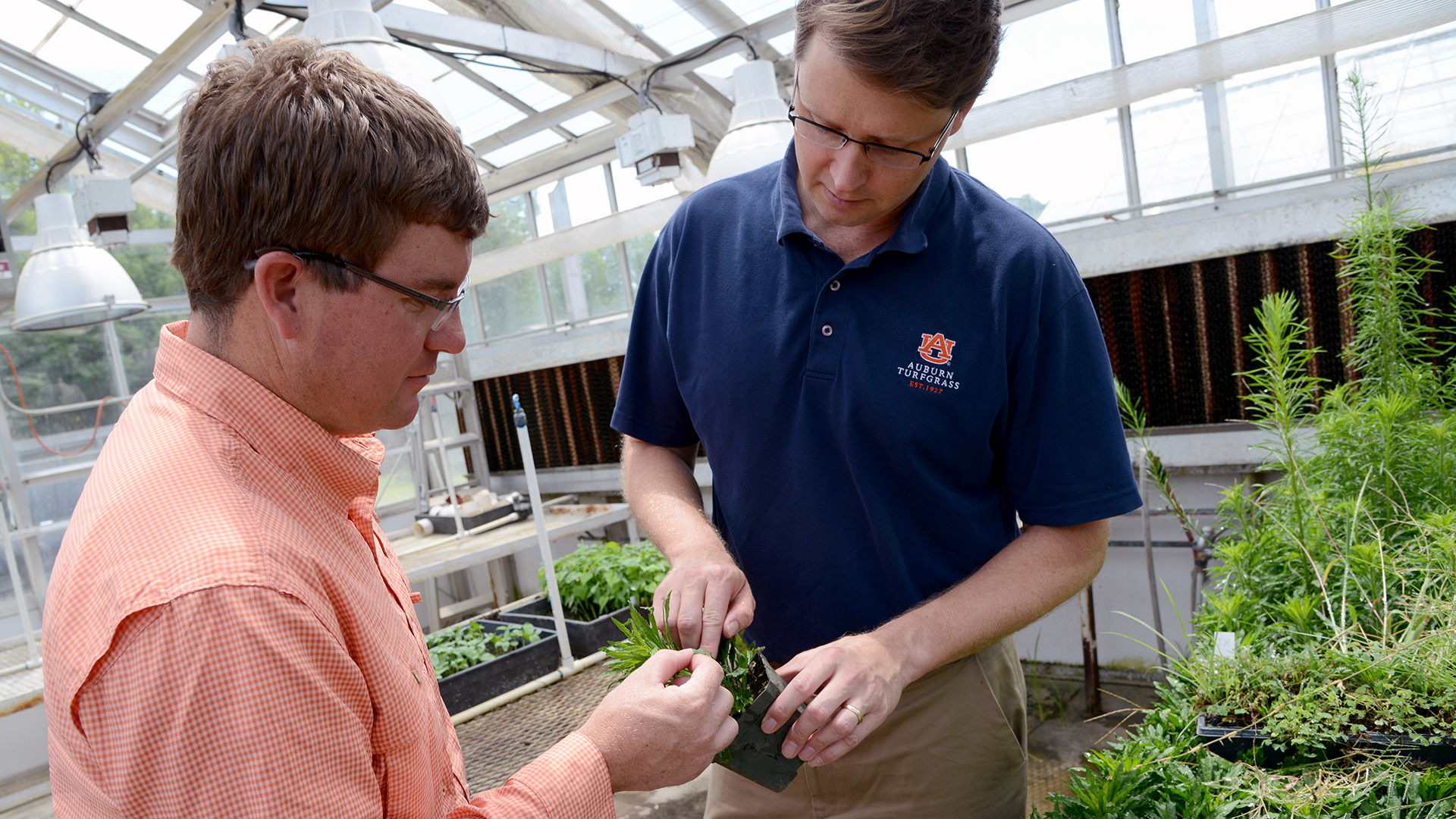 Professor-Scott-McElroy-Auburn-Weed-Science-Turfgrass-Herbicide-Greenhouse-1664