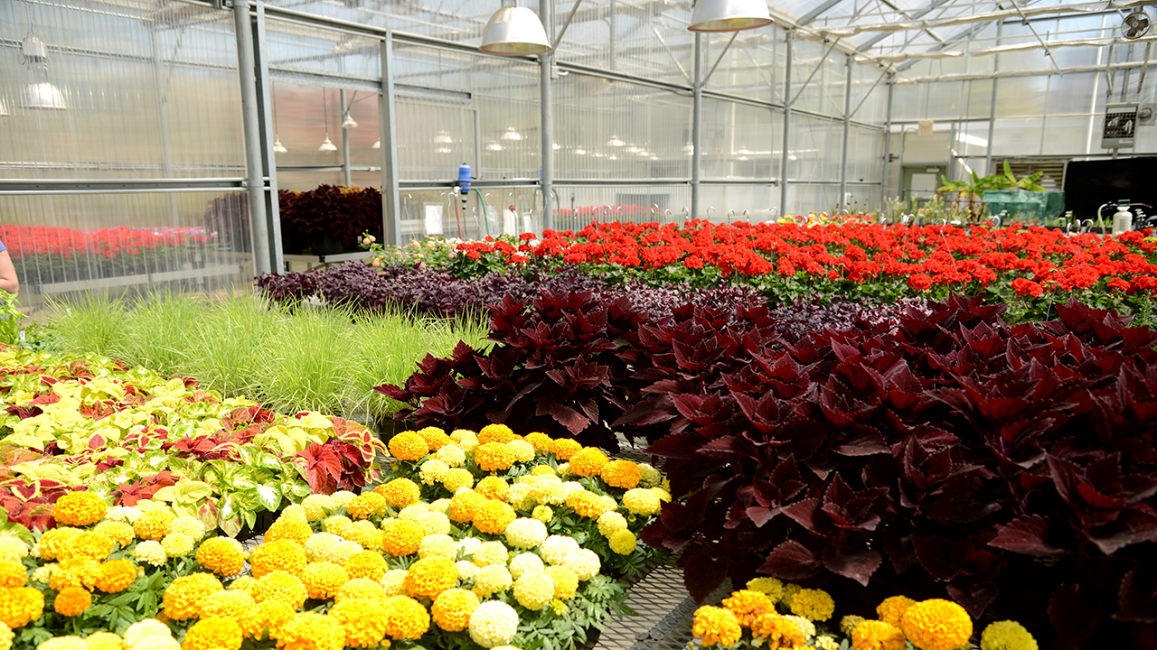Rows-of-Plants-and-Flowers-in-Auburn-Paterson-Greenhouse-Nursery-8840