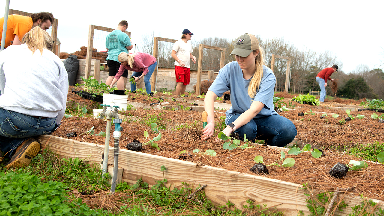 Transformation-Garden-College-Students-Container-Gardens-Urban-Green-Space-Hands-on-Experience-in-Dirt-AL