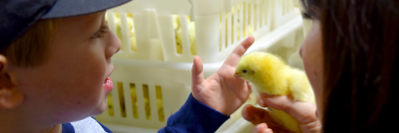 Victoria-Pratt-and-son-inspecting-a-little-chick-yellow-Avian-Medicine-Masters-Degree-Poultry-Science-Pre-Veterinary-Med-Major-Auburn-University-Chicken-Hatchery-Broiler-House-Bird-Health-sm