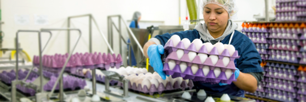 Online-Egg-HACCP-Certification-Working-with-Containers-sm