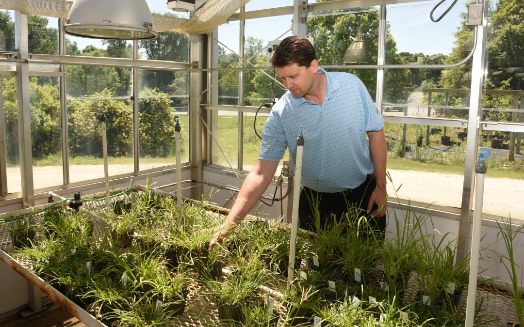 Researcher part of international weed genomics effort