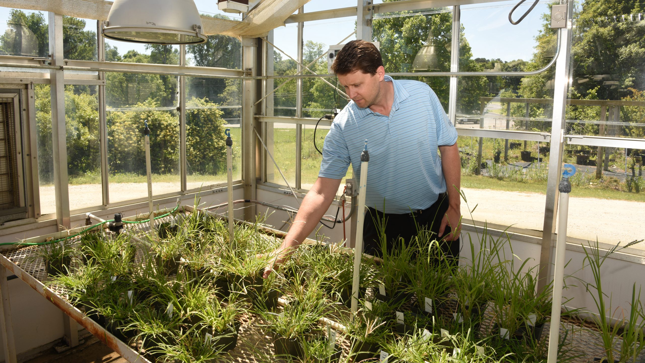 Scott McElroy tends to a plant in a greenhouse
