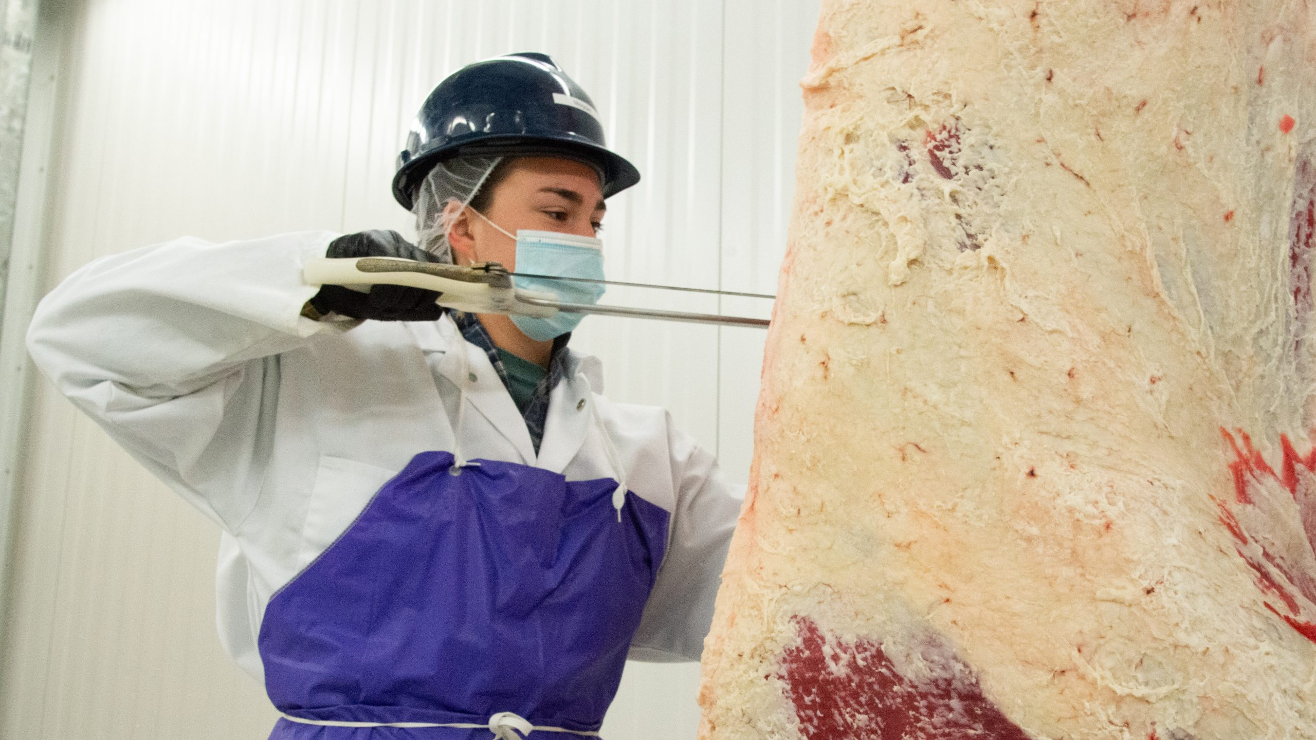 Student carves hanging beef carcass