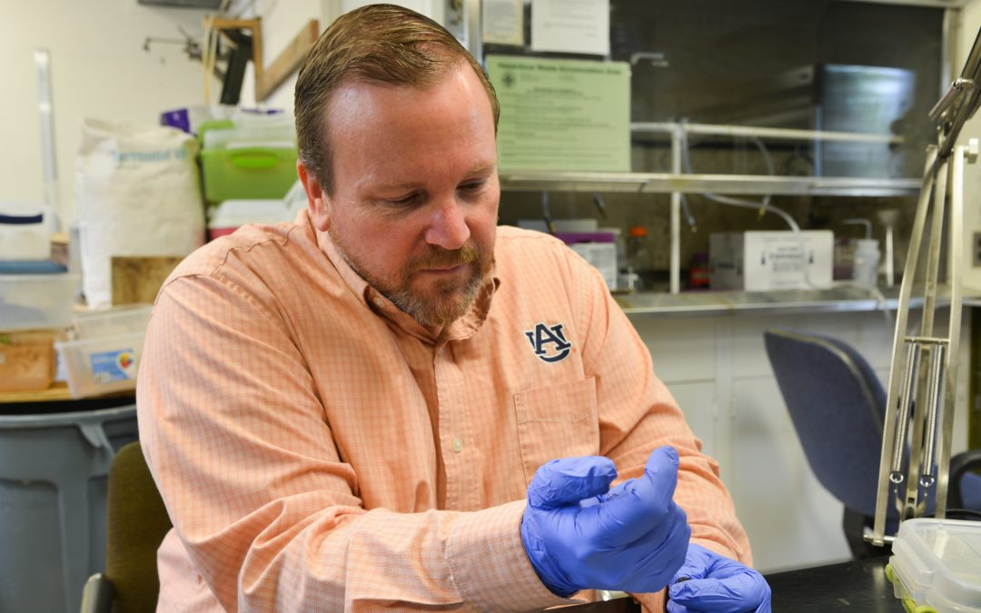 Auburn entomologist seeks alternatives for urban pesticide use