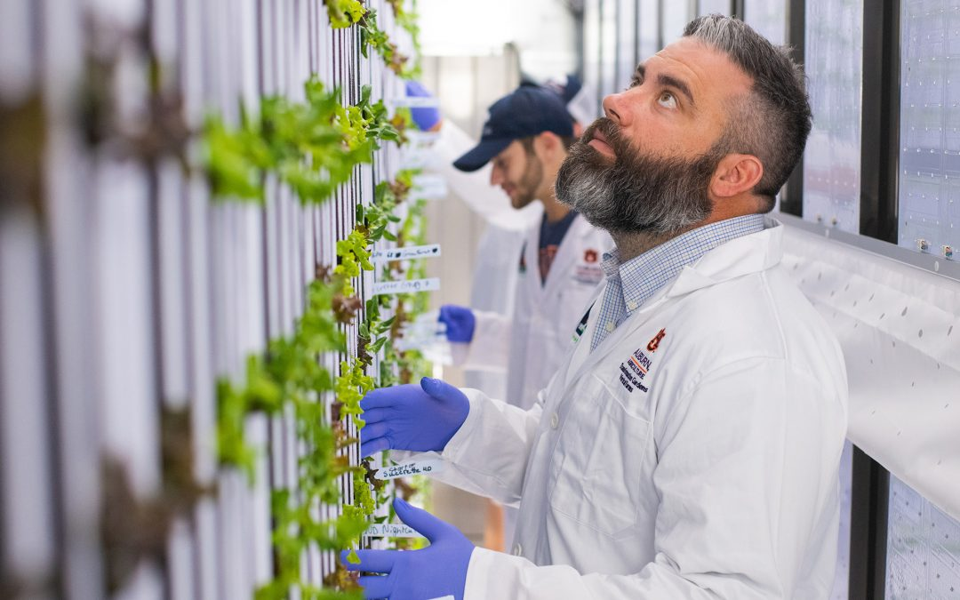 College of Agriculture using high-tech shipping containers to grow produce for Campus Dining