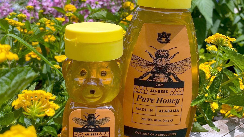 AU Bees Auburn Honey Labels on Bottles, Alabama, Pure Honey 2021