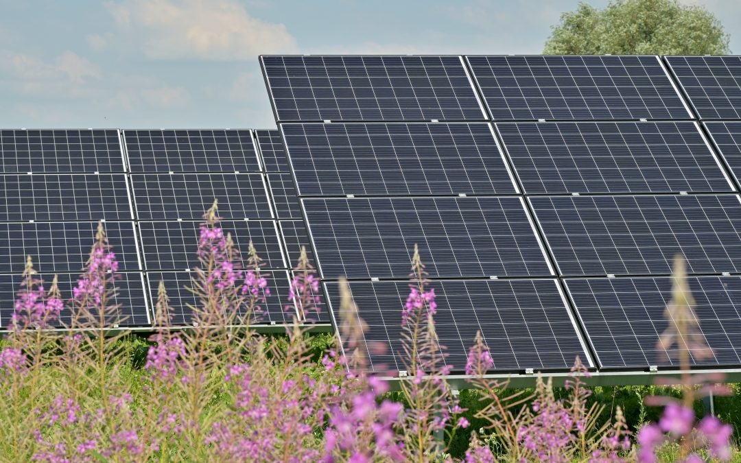 """""""Agrivoltaic"""" research combines solar energy, food production"""
