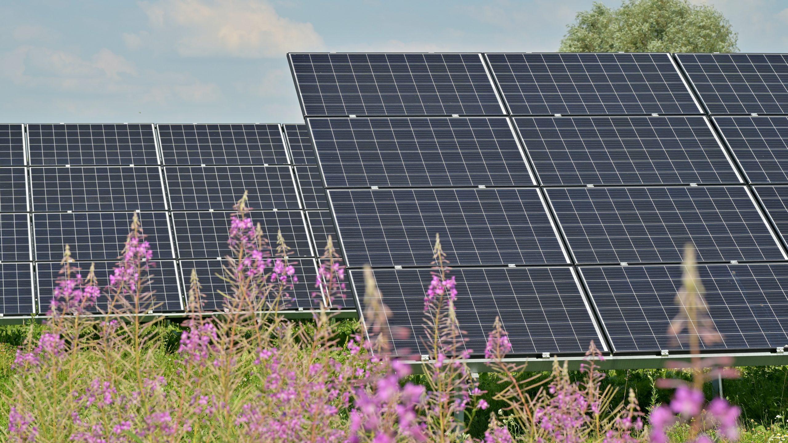 solar panels in a field of wildflowers